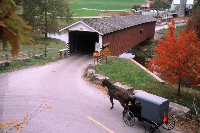 Horse and buggy approaching covered bridge on a vibrant autumn day